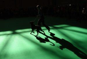 จีนเริ่มฝึกลูกสุนัขที่เกิดจากการโคลนนิ่งสุดยอดเจ้าตูบนักสืบแดนมังกร พบศักยภาพเหนือชั้นสุนัขปกติ
