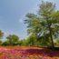 สวนสาธารณะจือข่าเซวียน (知卡宣森林公園)